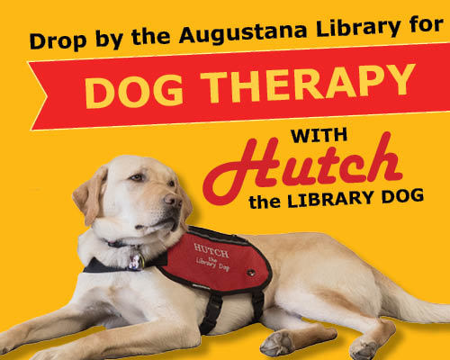 Hutch the therapy dog
