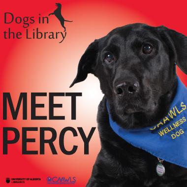 meet percy dog